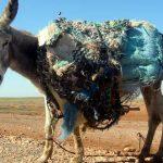 Roadtrip Marokko: Von Ceuta nach M´hamid