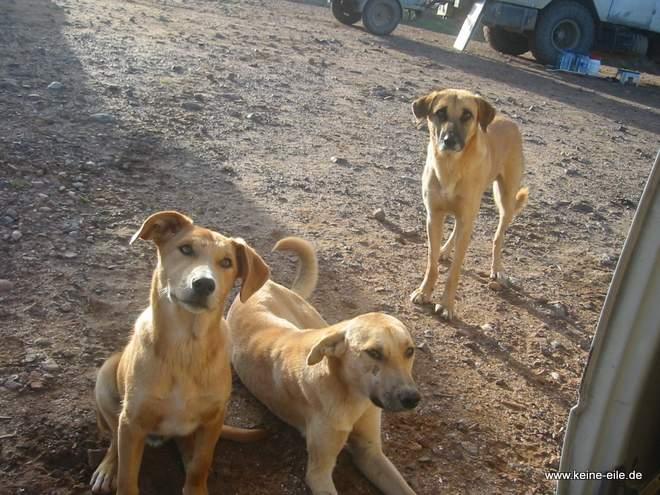 Roadtrip Marokko: Hunde