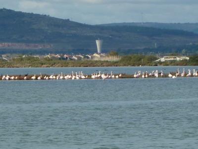 Roadtrip Frankreich: Flamingos