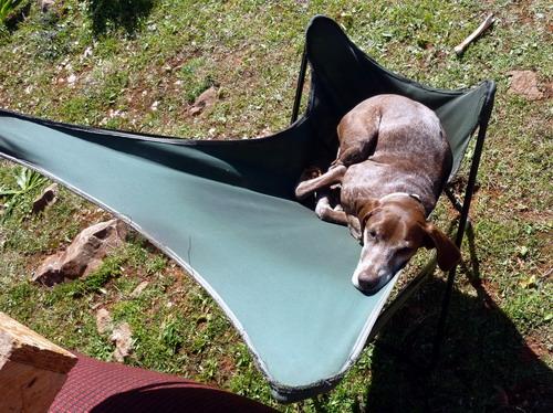 Reisen mit Hund Lucy