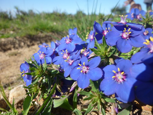 Frühling in der Algarve