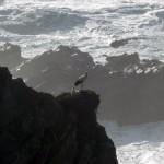 Störche am Cabo Sardao