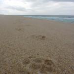 Am Strand bei Melides