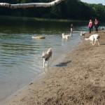 Hundeparadies im Grunewald