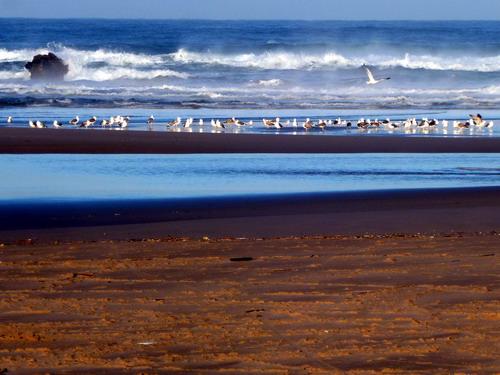 Praia do Carvalhal_1