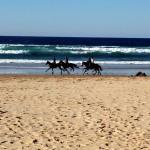 Portugal, Algarve, Aljezur, Praia do Vale Figueiras-Gruppe Reiter am Strand
