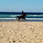 Portugal, Algarve, Aljezur, Praia do Vale Figueiras-einzelner Reiter am Strand