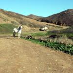 Portugal, Algarve, Aljezur, Praia de Vale Figueiras: Pferdchen auf dem Parkplatz