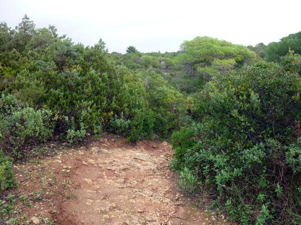Reisebericht Praia da Marinha, Algarve, Portugal: Über Stock und Stein durch dichtes Grün