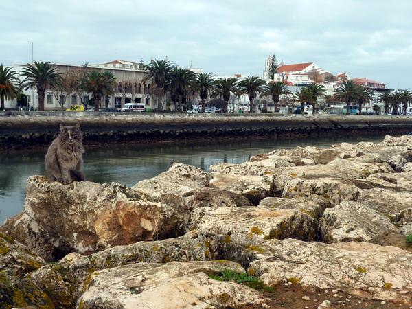 Katze und Aussicht auf Lagos, Algarve, Portugal