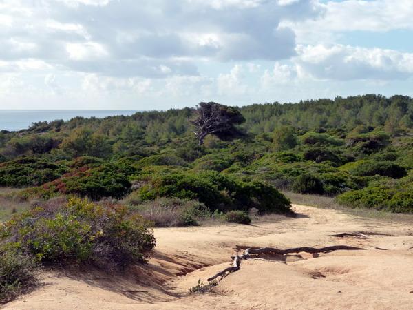 Portugal, Algarve, Praia da Marinha: Ein grüner Wald
