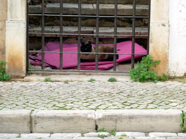 Die Katze auf der rosa Denke, Loulé, Algarve, Portugal