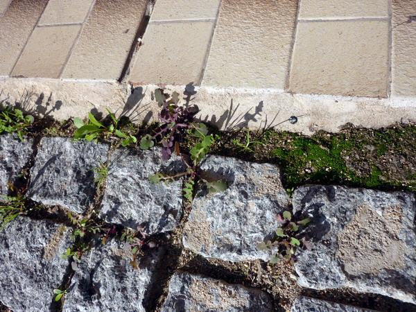 Grasbüschel im Rinnstein