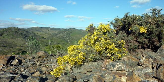 Grüße aus der Serra de Alcaria do Cume