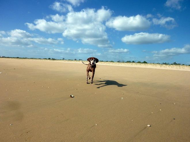 Lucy am Strand von Monte Gordo, Algarve, Portugal