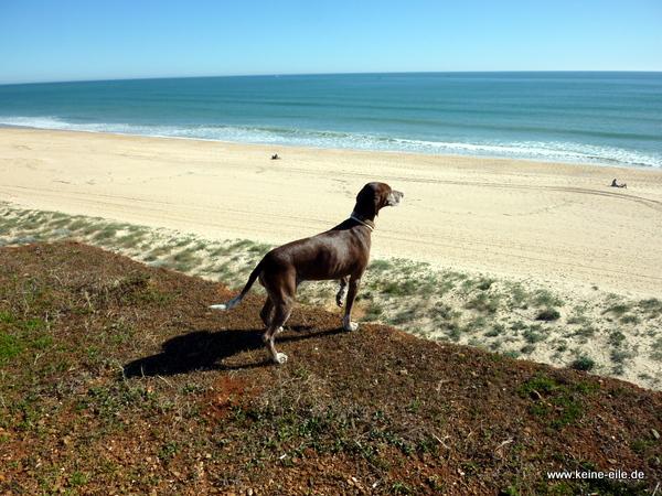 Lucy genießt den Ausblick, Quarteira, Algarve, Portugal