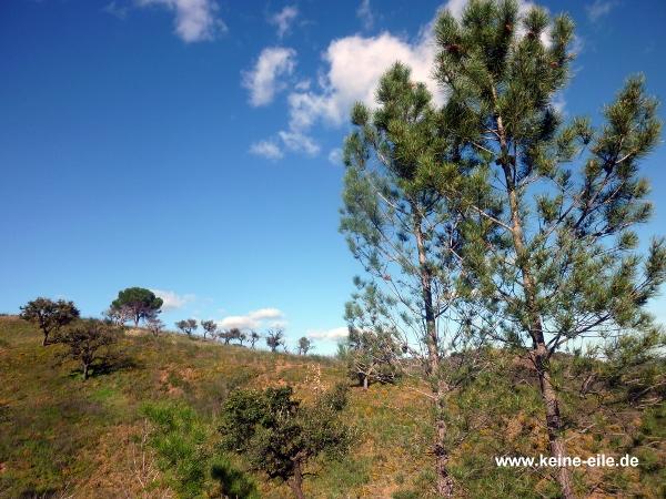 die grünen Hügel der Serra da Cuma, Algarve, Portugal