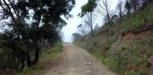 eine Schotterpiste schlängelt sich durchs Grün, Algarve, Portugal