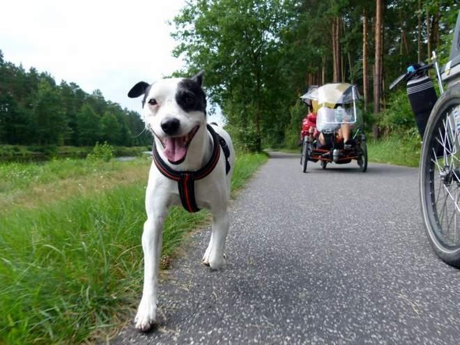 Reisen mit Hund und Fahrrad Rambo in Europa