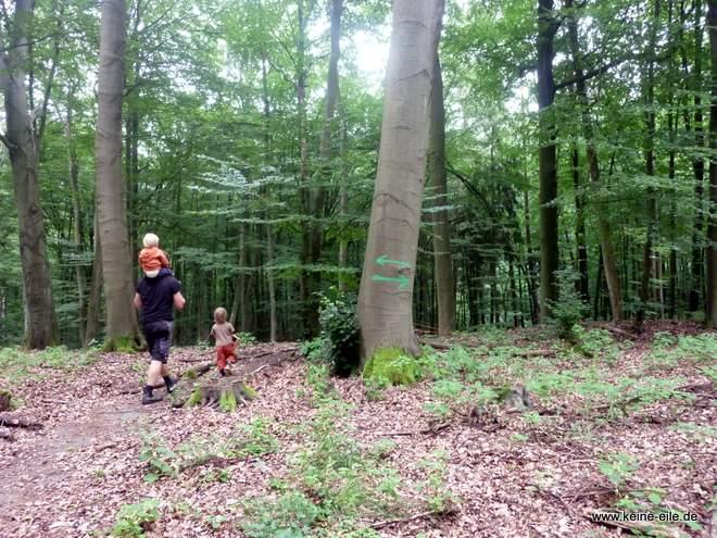 Waldspaziergang im Naturpark Barnim