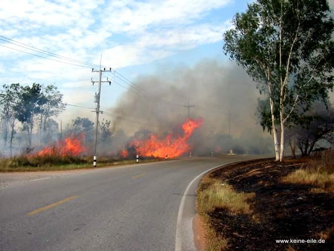 Hier brennt das Unterholz