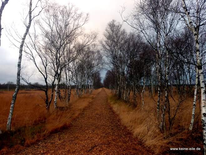Der Moorpfad durchs Günnemoor