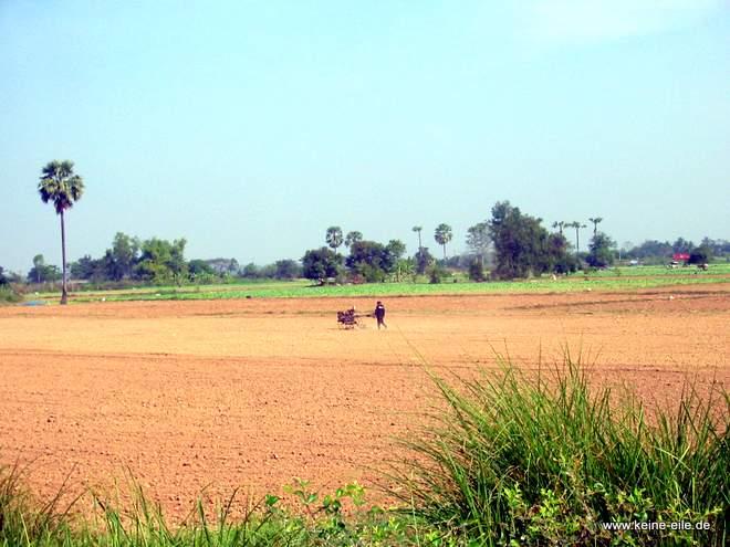 Feldarbeit in Thailand