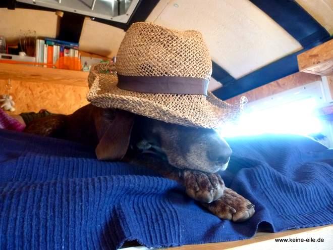 Reisen mit Hund im Wohnmobil