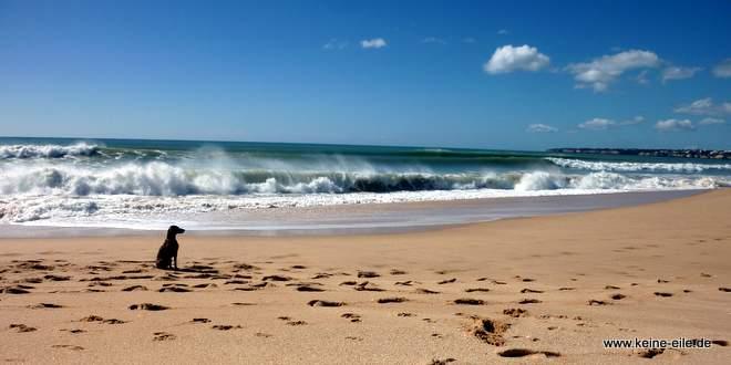 Lucy am Strand Praia Grande bei Armacao de Pera, Algarve, Portugal