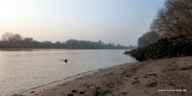 Lucy schwimmt in der Weser