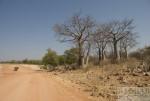Motorradtour Afrika: Baobab in Namibia