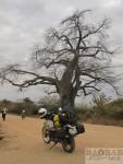 Motorradtour Afrika: Baobab in Sambia