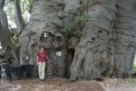 Baobab Bar Suedafrika