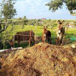 Esel bürsten, meditieren und ein Kompostklo – Hippieleben in Portugal
