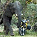 Auf zu den Baobabs – eine gewagte Motorradtour