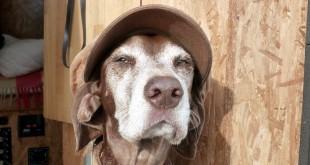 Lucy mit Mütze