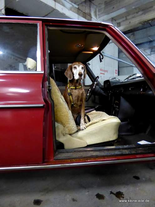 Lucy wartet derweil im Auto