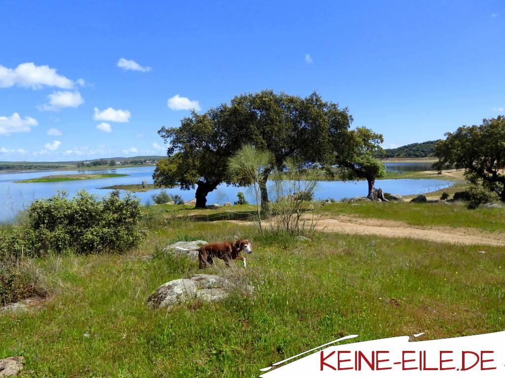 Am Lieblingsstausee, Alentejo, Portugal