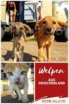 Über das Schicksal der vielen Straßenhunde in Griechenland haben wir schon viel gehört und gelesen. Sich dem zu entziehen ist eigentlich unmöglich. So kommt es, dass wir drei Welpen adoptieren, die wir am Straßenrand auflesen.