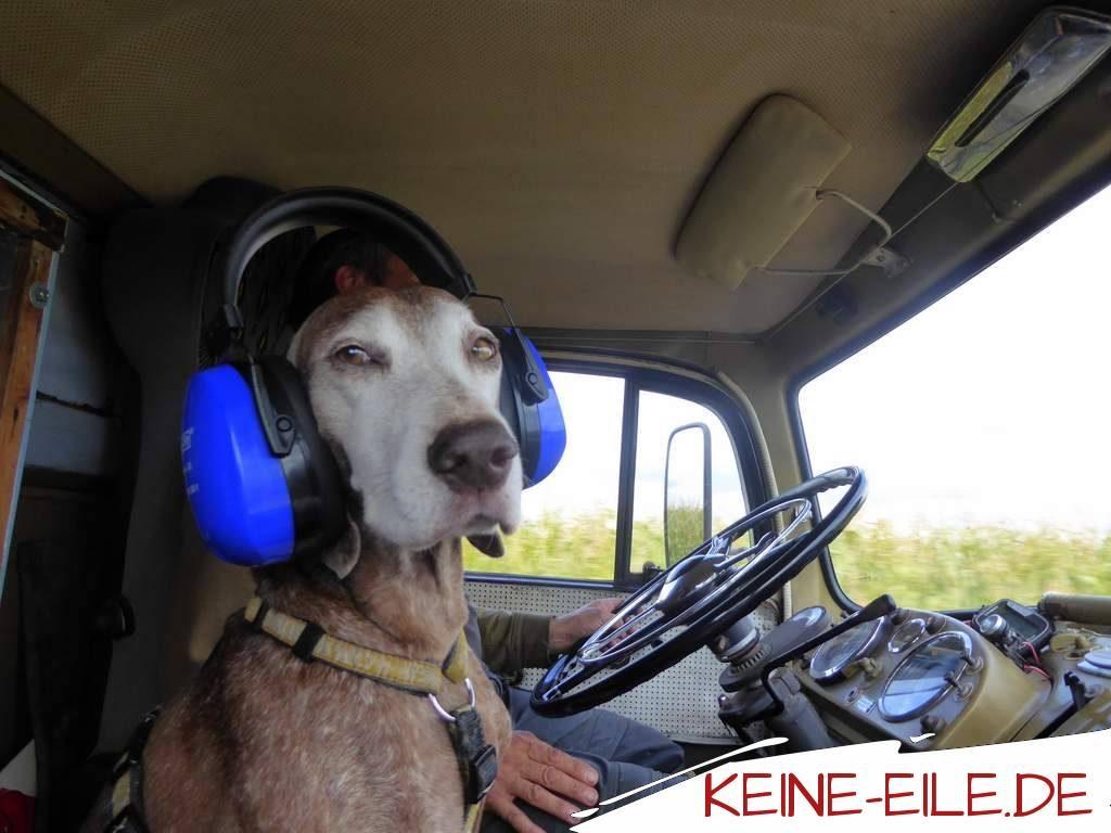 Anreise Griechenland - Lucy trägt Gehörschutz