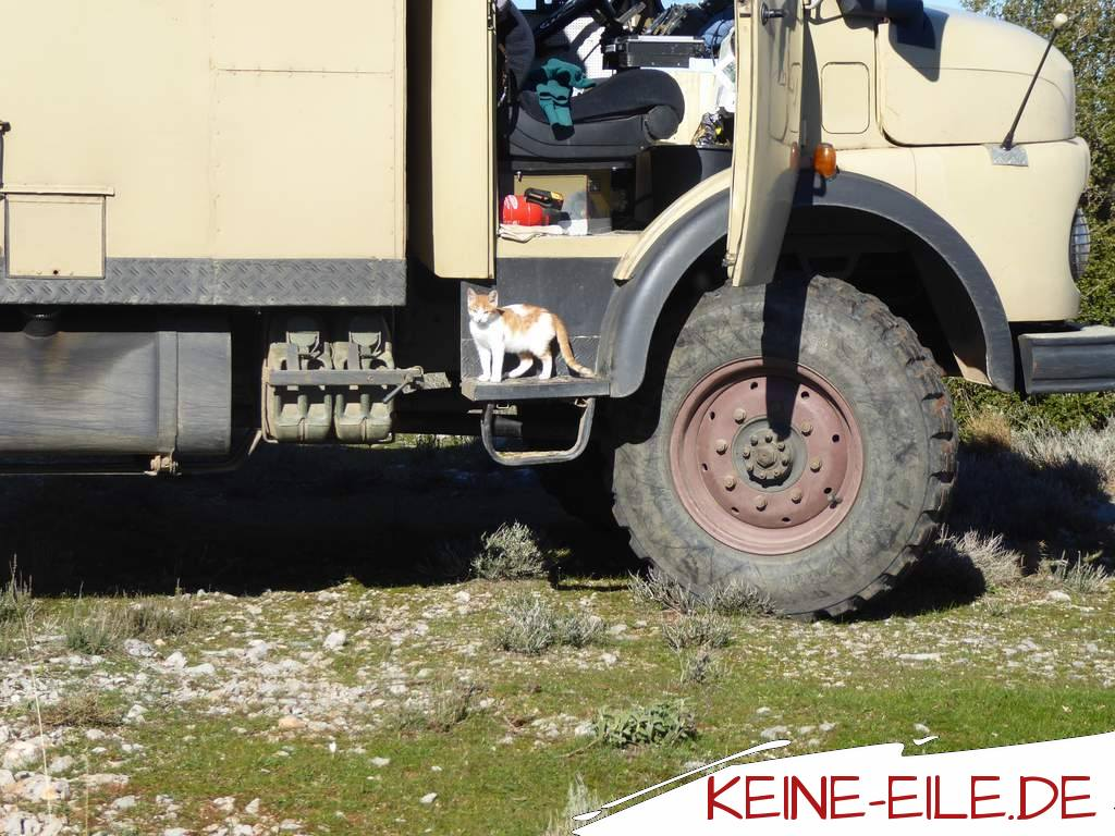 Reisebericht Griechenland: Auch Kater Katze freut sich über die neue Umgebung.