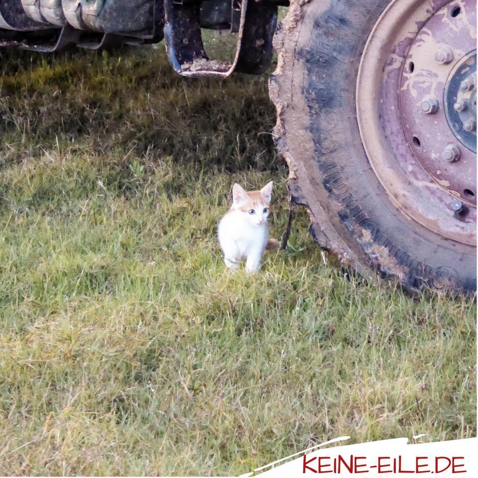 Kater Katze kennt Rasen noch nicht. Außerdem ist es auch nach nass. Lieber vorsichtig sein :)