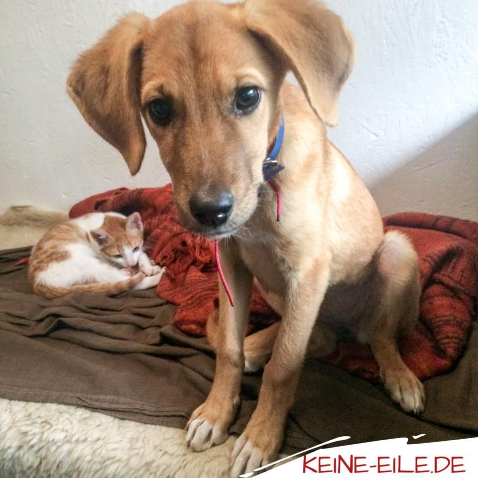 Mera und Kater Katze teilen gerne das Sofa und entdecken sich so langsam als Spielkameraden.