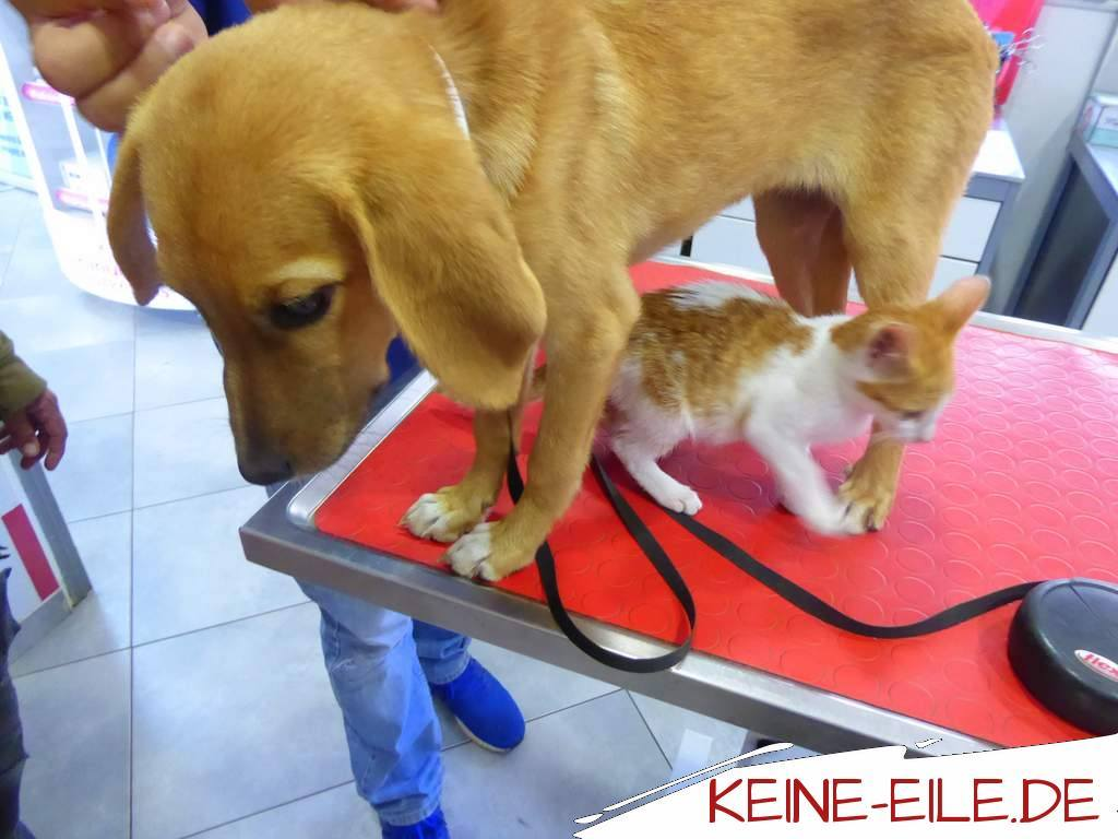 Mera und Kater Katze auf dem Behandlungstisch beim Arzt