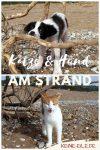 Thea und Katze: Hund und Katze am Strand