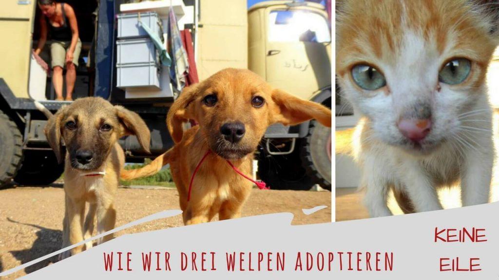 Welpen adoptieren