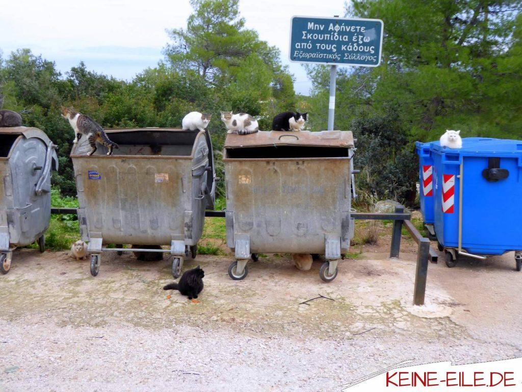 Katzen auf Mülltonne