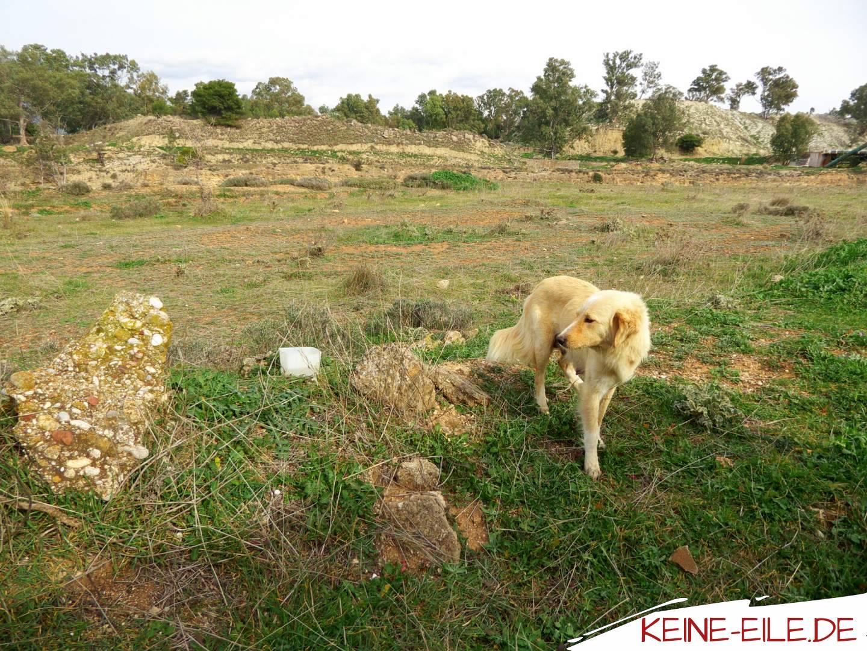 Hundedame in Korinth