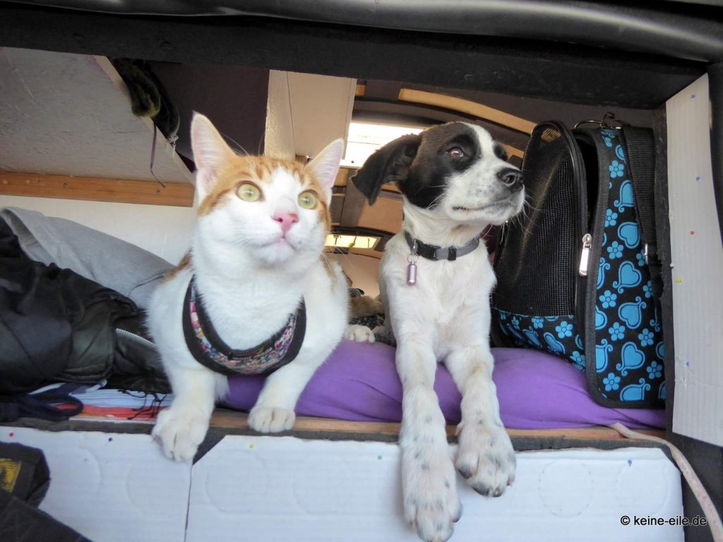 Thea und Katzi in Elea