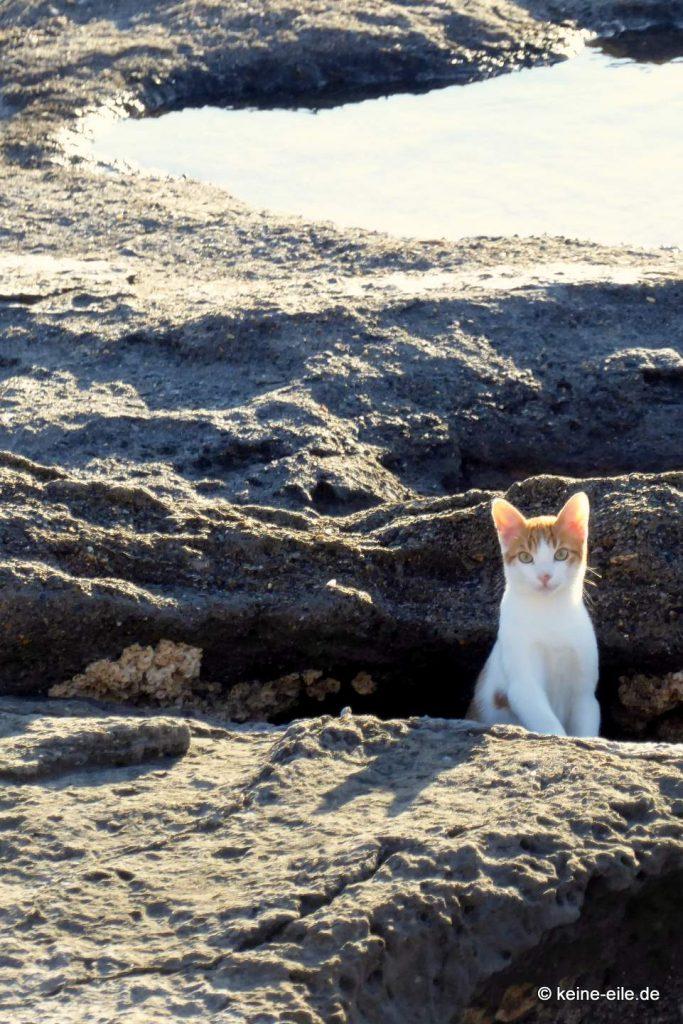 Katzi am Strand bei Profitis Ilias (2)